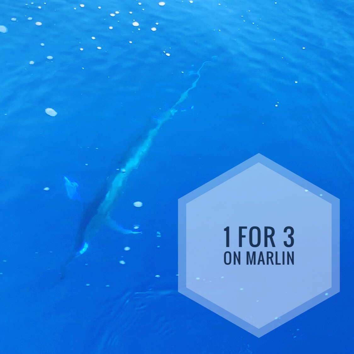 GULF_OF_MEXICO_MARLIN_FISHING