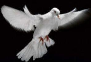 Dove as Symbol of Holy Spirit