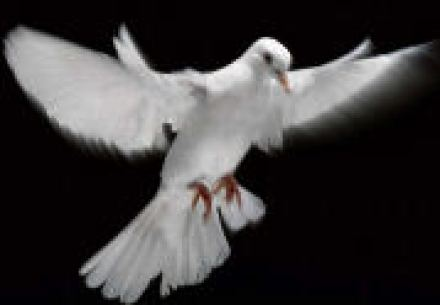 Dove as Symbol of Holy Spirit
