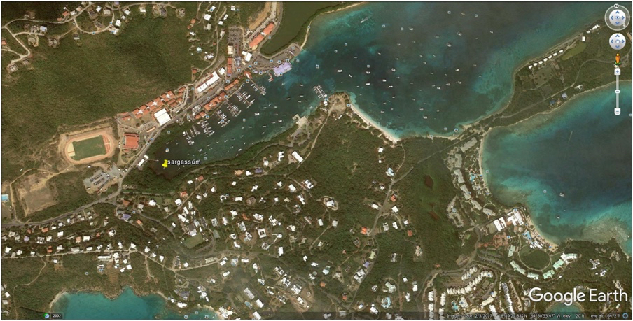 Foul Smelling Seaweed Plagues Red Hook Area St Thomas