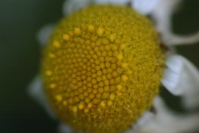 Close Up 16