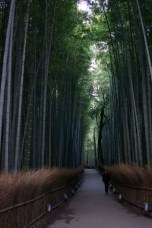 The bamboo forest, duh!