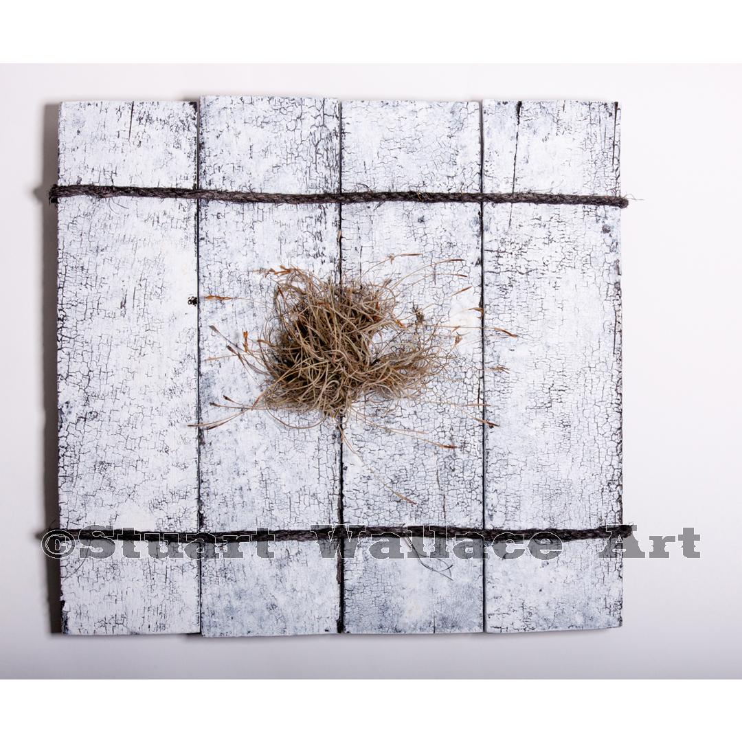 41 WM 851: White Moss