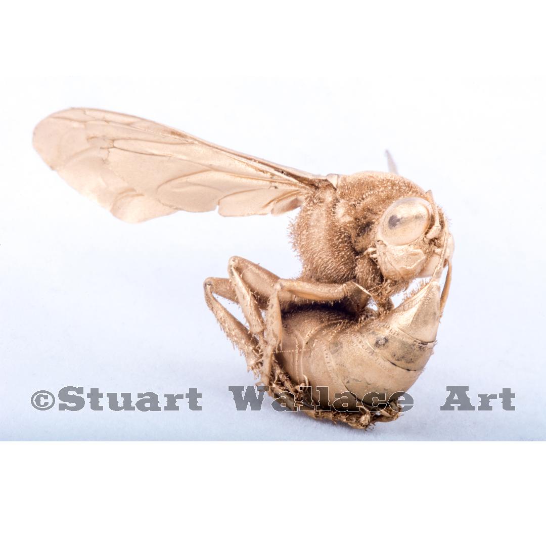 41 WM 899: Golden Hornet Two