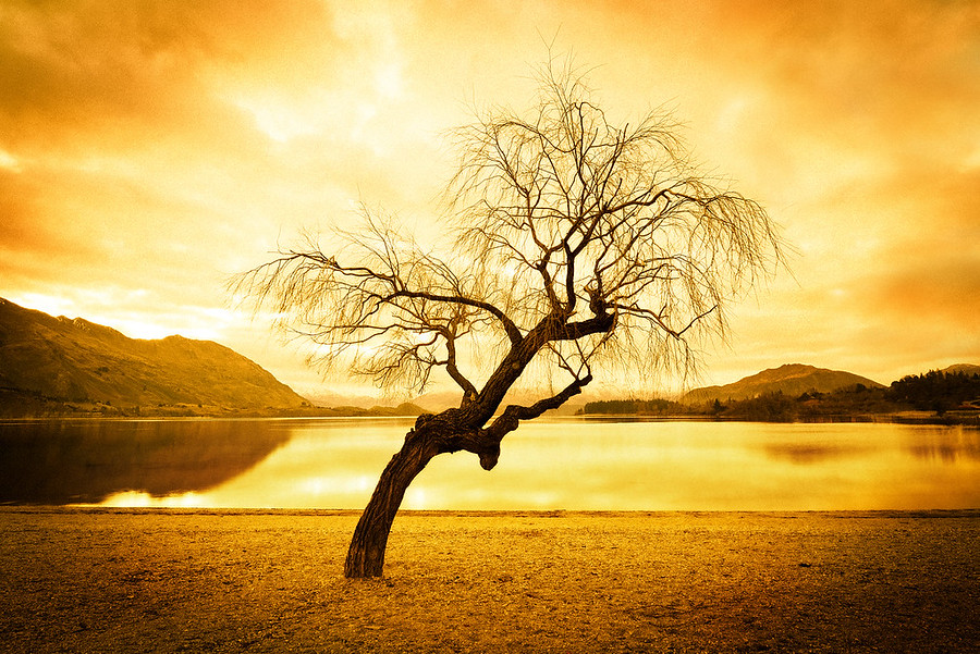 Lonely Tree in WanakaThis is one of three tree photos I will publish over the coming weeks. You may remember a previous one where the bottom of the trunk was on fire… that one DID have a bit of Photoshop… We'll also go over that one in the class.- Trey RatcliffClick here to read the entire post at the Stuck in Customs blog.