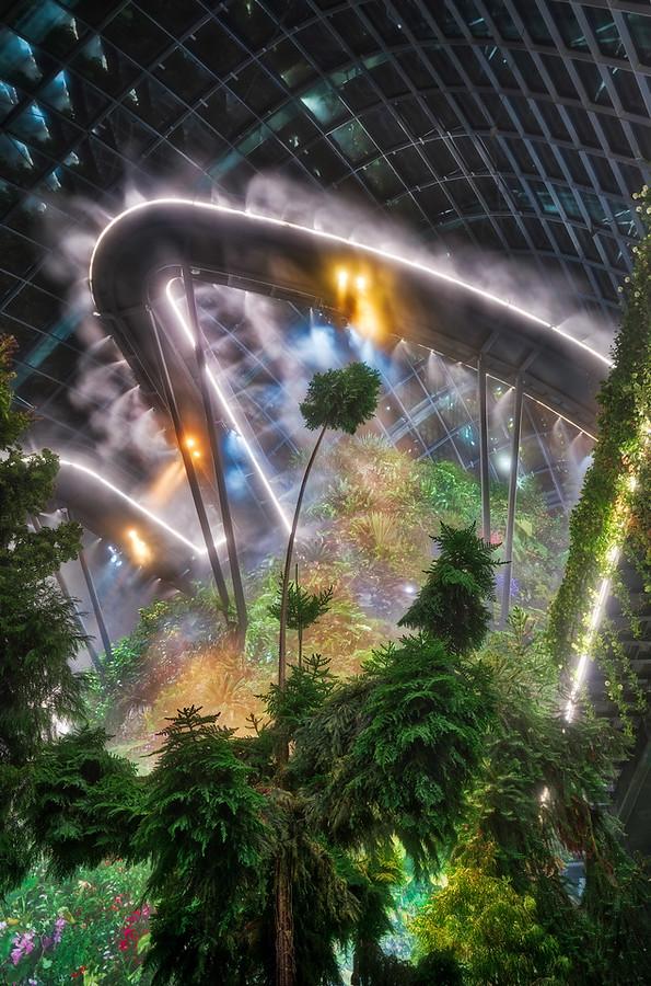 Inside the Inside Rainforest
