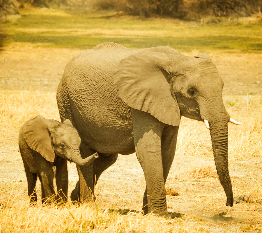 Baby and Mommy Elephant – Stuck in Customs