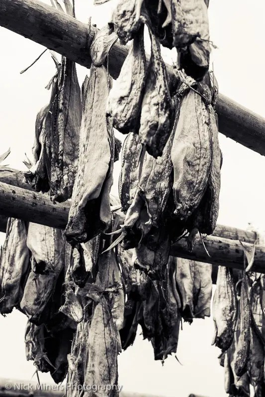 Dried fish on drying frames.