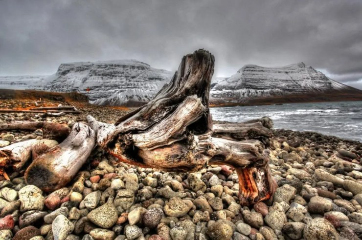 Driftwood along the Strandir coast