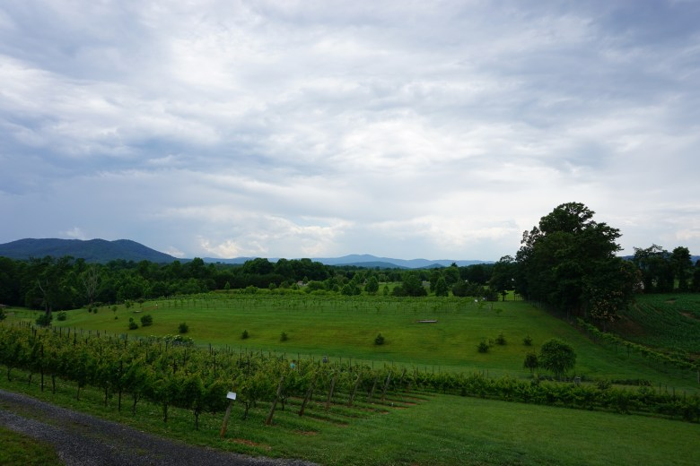 a vineyard on rolling hills with mountains in the background in Yadkin Valley NC