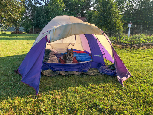 Dog in a tent. Camping gear for dogs.