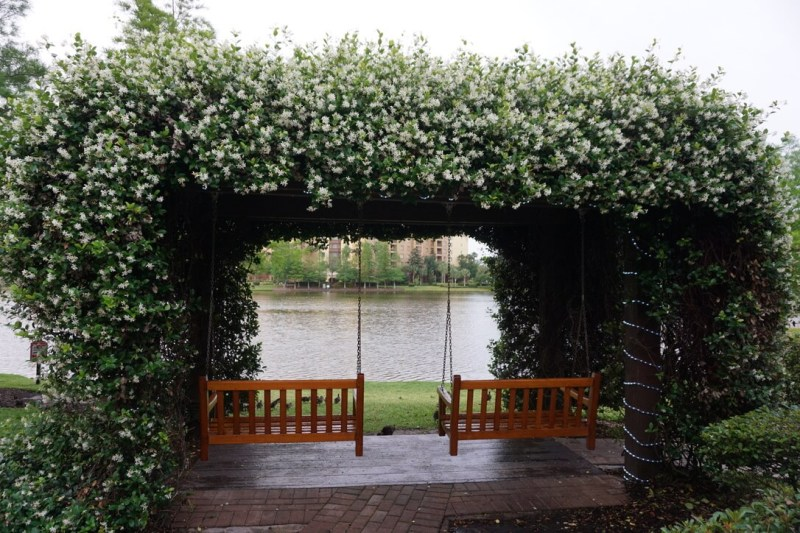Two wooden porch swings hanging from a flower covered pergola