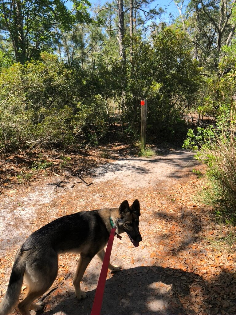 puppy on hiking trail