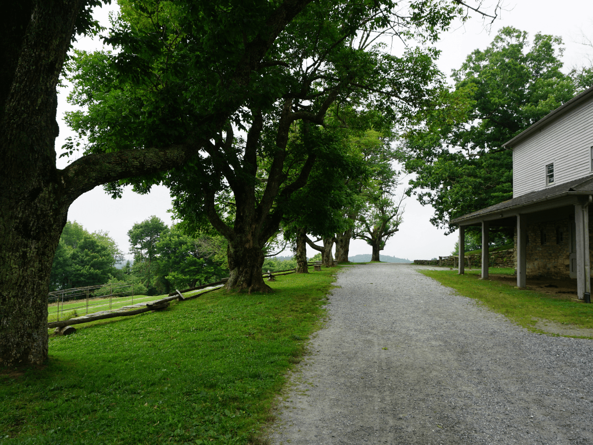 trees lining path with house on another side
