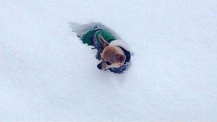 Харьков и дальше будет заметать снегом, полиции поручено убрать с улиц машины 1
