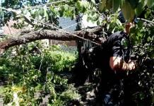 В Харькове патрульные помогли женщине, во дворе которой упало дерево 1
