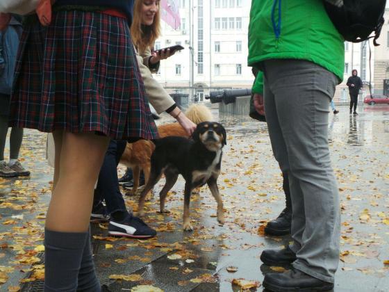 В Харькове митинговали за права животных 13