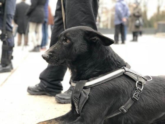 В Харькове состоялось траурное шествие памяти жертв Голодомора 13