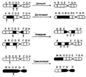 duplicări genetice
