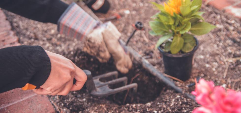 Personal planting a flower