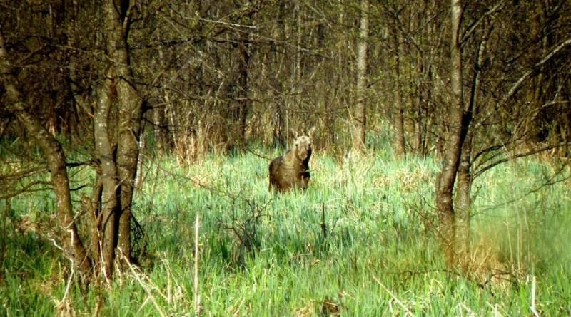 Бебжанский национальный парк