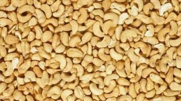 Cashew Payroll Synopsis