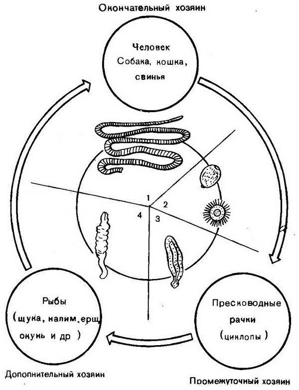 teniasis teniarinhoses féregtelenítő tabletta