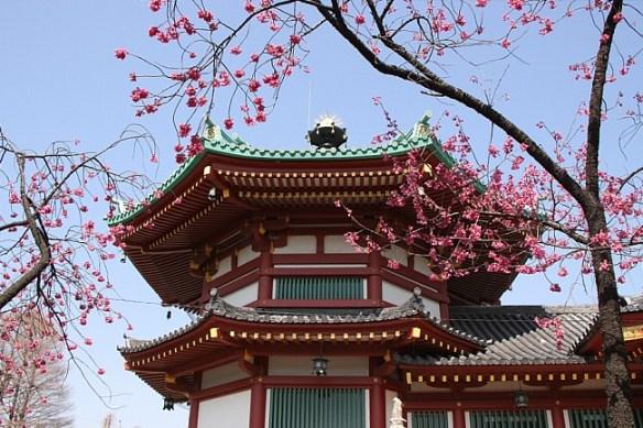 Kanhizakura at Bentendo