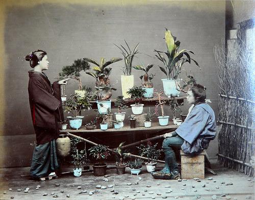 1886_tokyo_plants_adolfo_farsari_t500