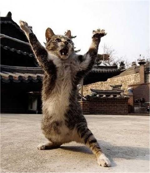 gatto paura spavento ninja