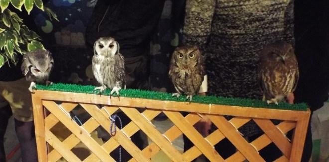 owls-10