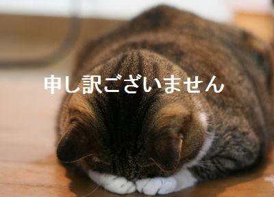 Moushiwake gozaimasen! Sono mortificato!