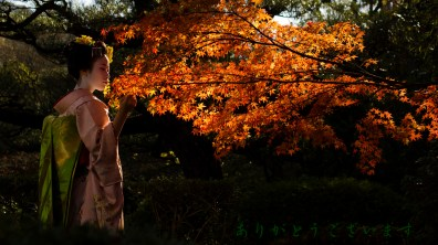 Japanexperterna.se su Flickr.com con licenza Creative Commons