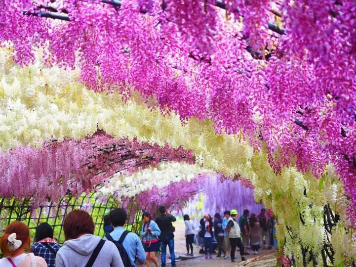 3 cose che nessuno sa sulla soia fuji 6 At-Kawachi-Fuji-Garden-In-Japan