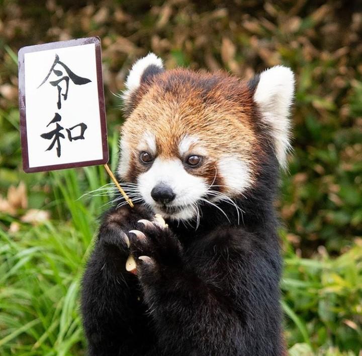 La febbre del sabato Reiwa animali (1)