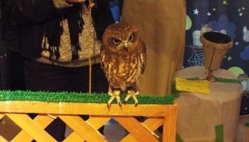 owls-46