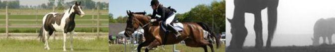 holandiaw.animals_horse_rider_004
