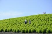 hitachi-seaside-park-japon9