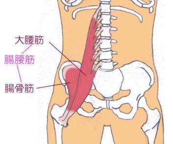 「腸腰筋」の画像検索結果