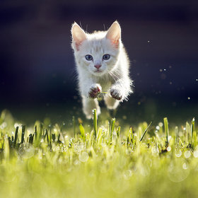 Kitty by Maris Ojasuu