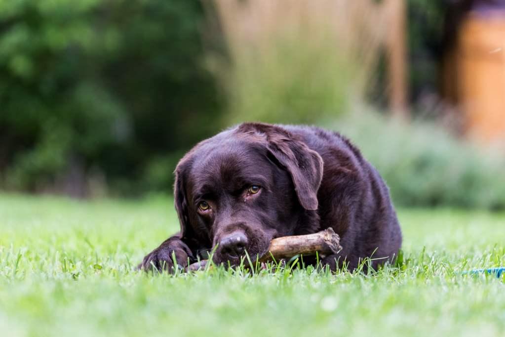photo d'un chien noir avec un baton