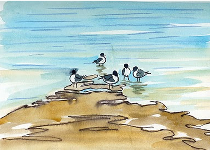 """Color Sketch for Painting of Shorebirds """"Laughing Gull"""""""