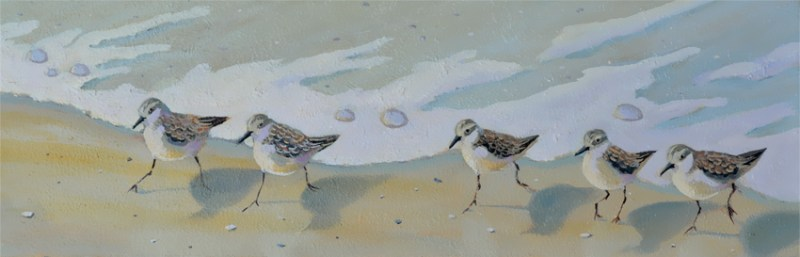 sandpiper birds running on the beach oil painting by P.J. Cook
