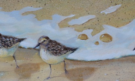 Sandpiper Birds Oil Painting Update!