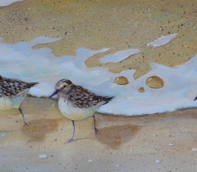 Sandpiper Birds Oil Painting Update!