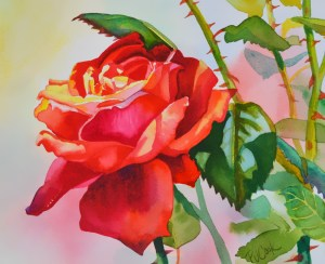red rose flower watercolor painting by artist PJ Cook