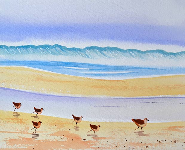 Sandpiper Birds Watercolor