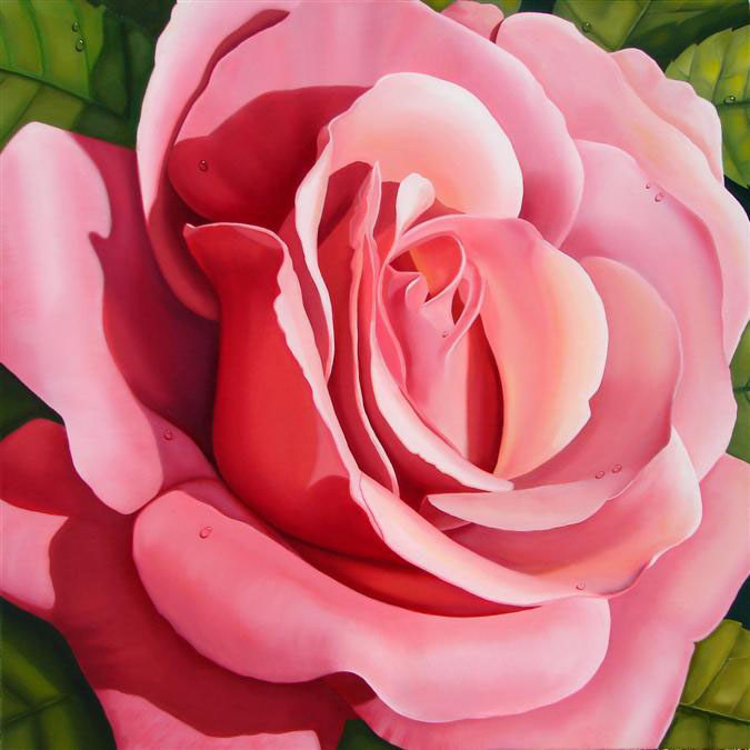 Pink Rose, 20 x 20 inch canvas print floral