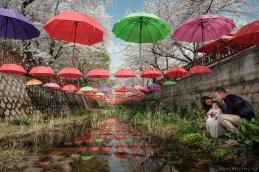 Jinhae Cherry Blossom Festival Yeojwacheon Stream Family Portrait Photographer South Korea-16