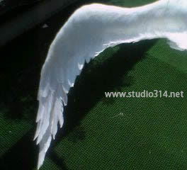 Wing051-s
